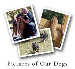 View Pictures of Our Dogs