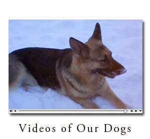 View Videos of Our Dogs